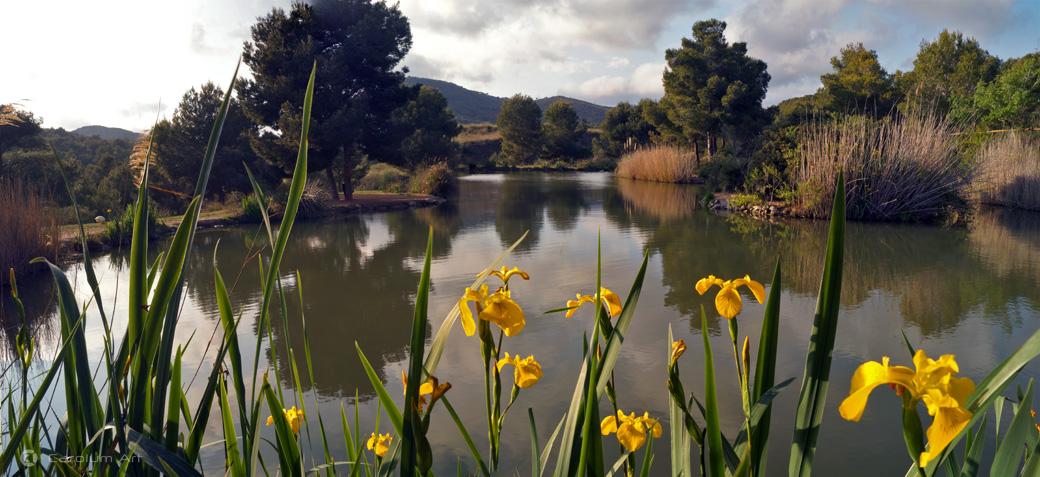 panoramica-lirios-en-el-lago