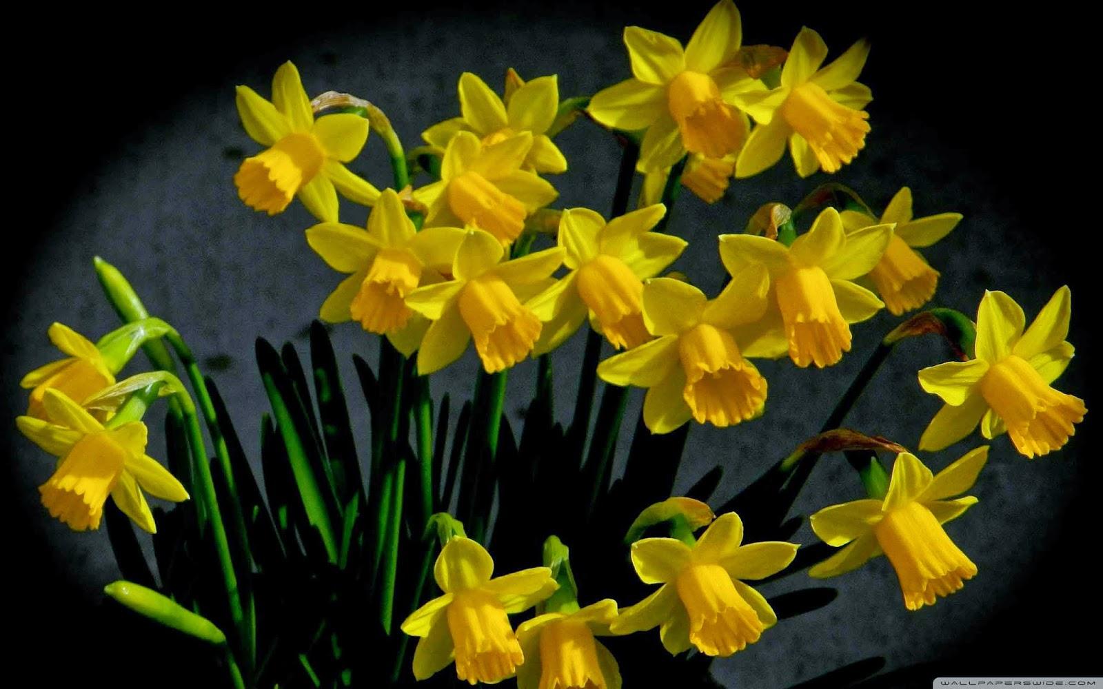 bursting into spring wallpaper