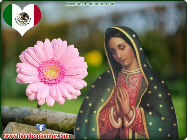 La Virgen De Guadalupe Imagenes