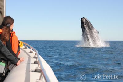 Walbeobachtungen Patagoniien Argentinen