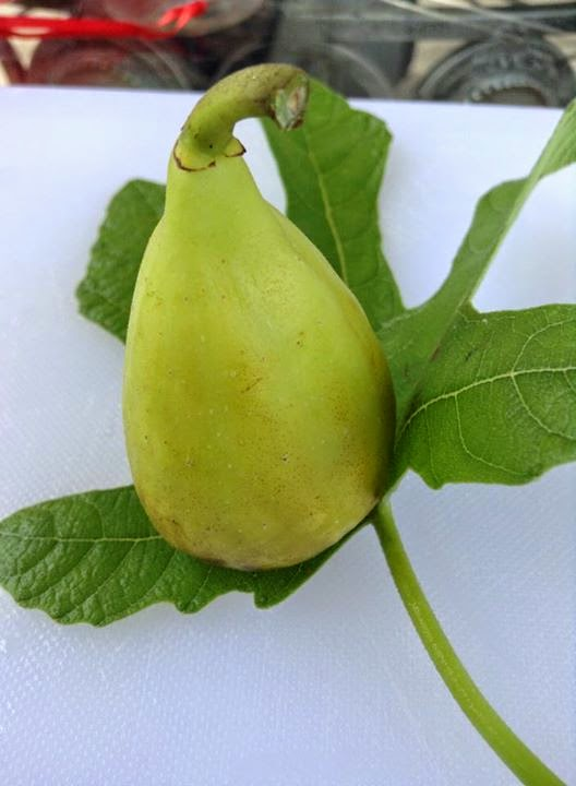 figs in spanish