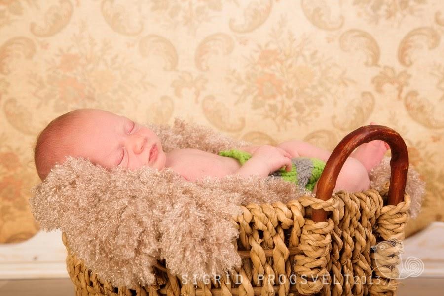 newborn-beebi-fotostuudios