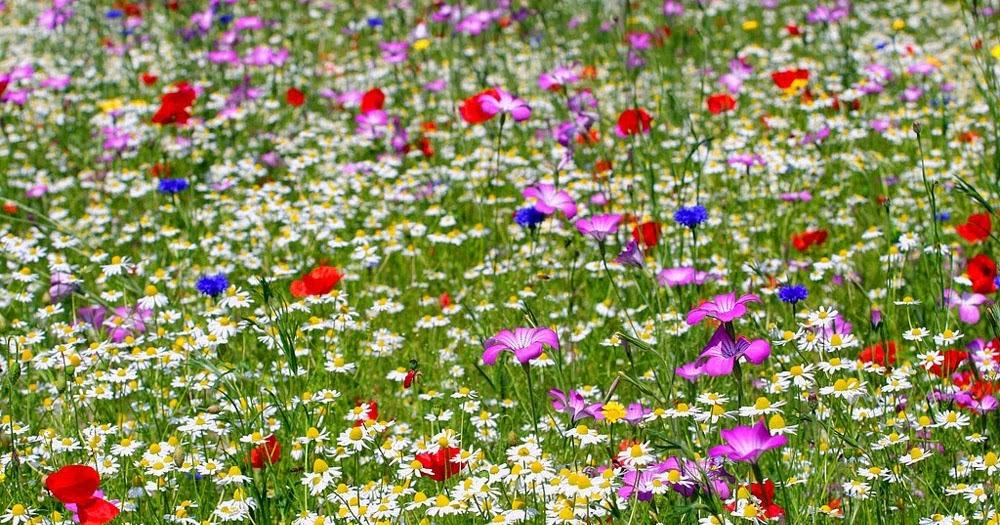 Arte y jardiner a dise o de jardines jardines secos de for Diseno de jardines 3d 7 0 keygen