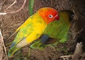Informasi Hobi Burung Berkicau Hobi Burung Berkicau | Share The ...