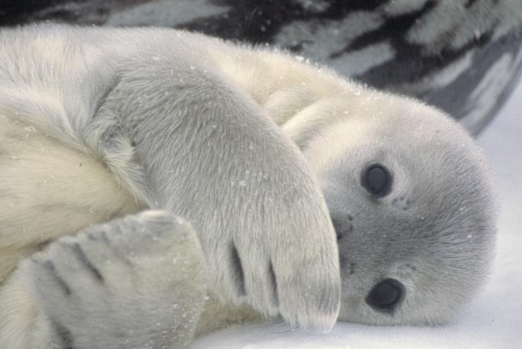 My Journey to Antarctica: Antarctica Animals
