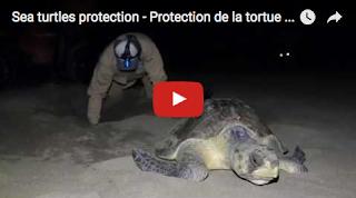 Protection de la tortue marine au Chiapas