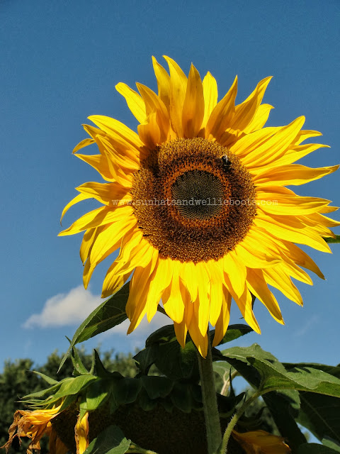 http://www.sunhatsandwellieboots.com/2013/10/5-ways-to-play-sunflowers-in-autumn.html