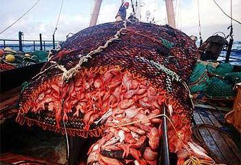 Resultado de imagen para imagenes pesca en alta mar