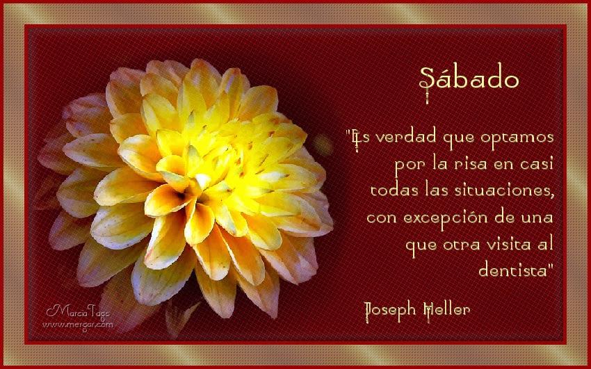 Feliz Sábado - Página 6 Mgc-Flores-24_06-Sabado_Tube-Sonia