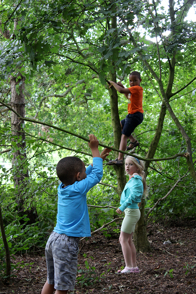 explorers-in-action-climbing-trees-children-playing-upton-todaymyway.com