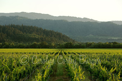 beringer gamble ranch vineyard