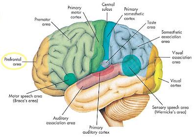 Cara Mempertajam Daya Ingat Otak
