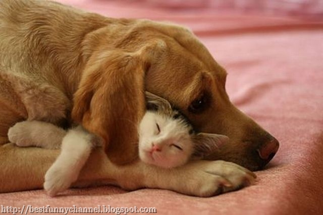 Cat and Dog Best Friends.
