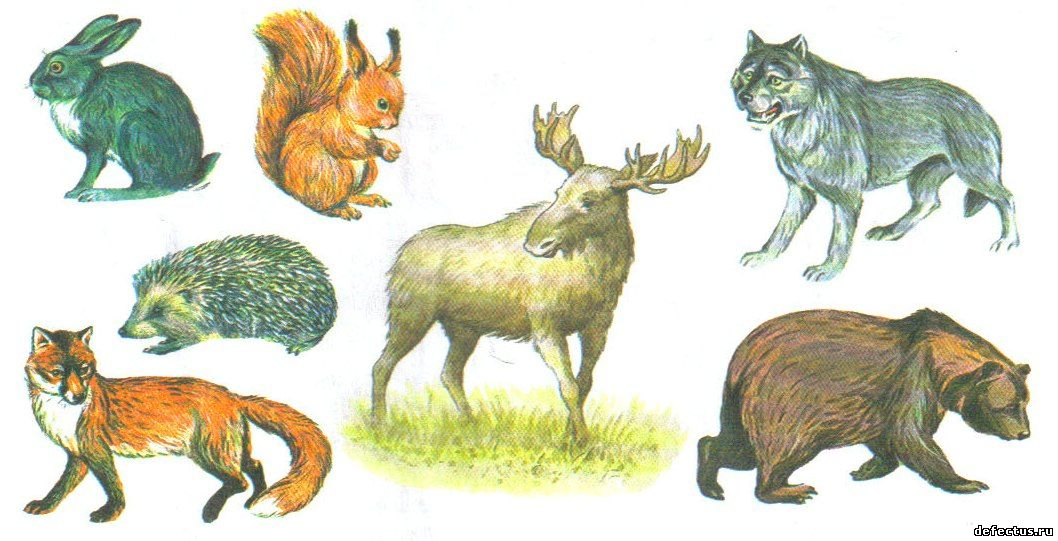 Картинки для детей подсолнушки