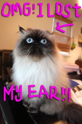 cat-lost-ears01