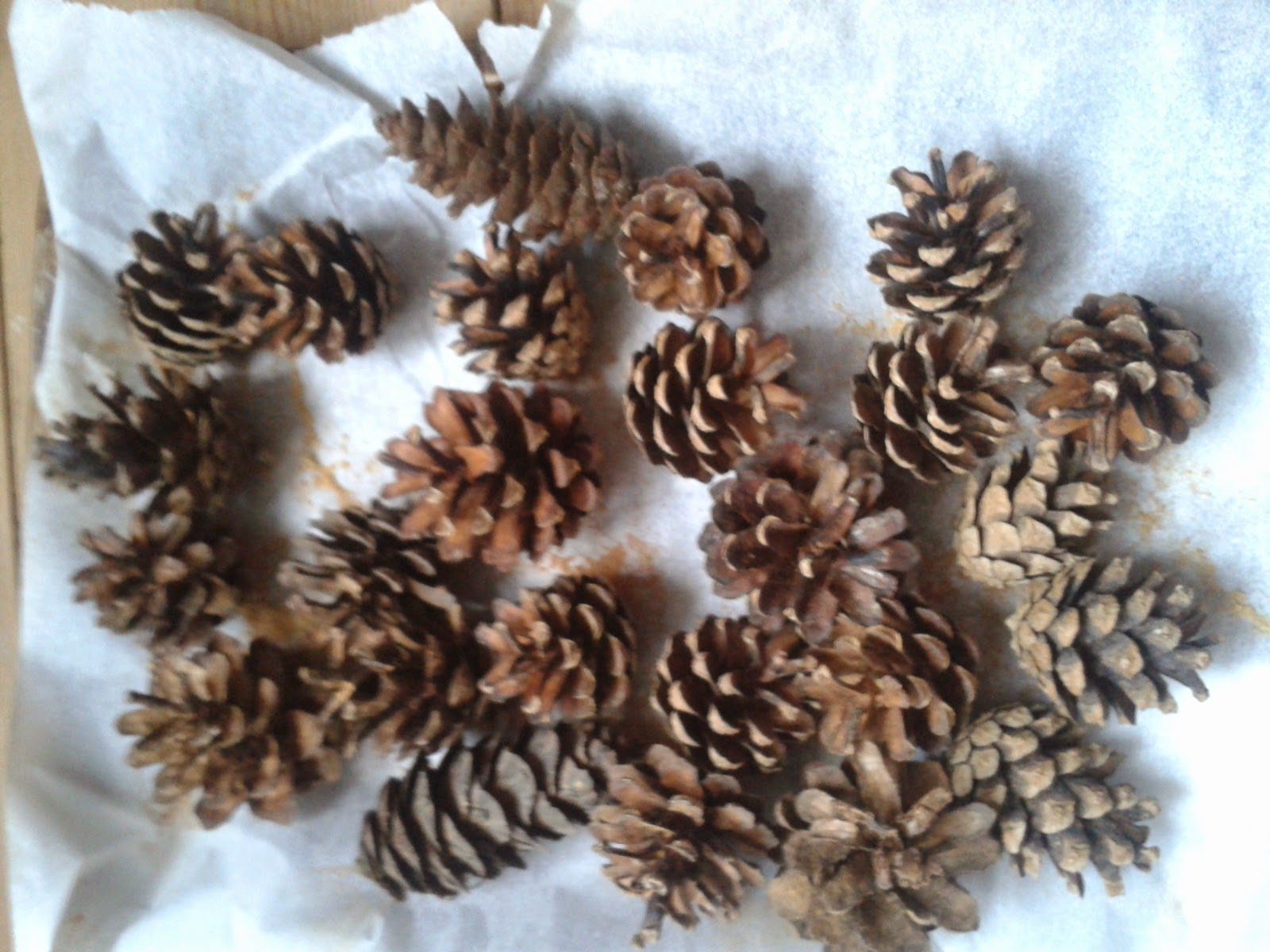 baking pinecones