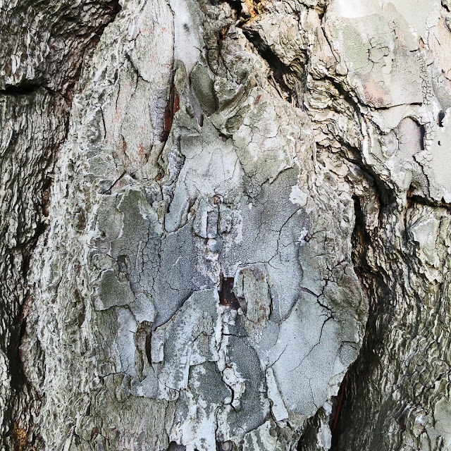 Varying greys and textures on tree trunk.