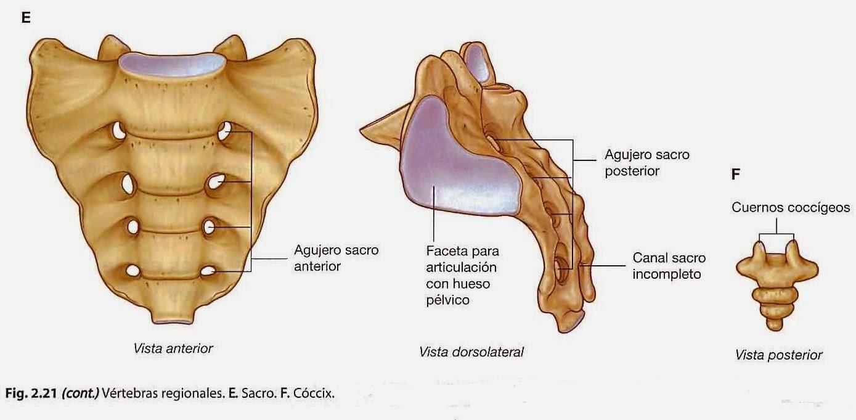 La osteocondrosis de la columna vertebral traumático