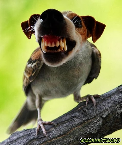 02-Bird-and-Dog-a-Angry-Bird-Graphics-Designer-Digital-Taxidermist-Animangler-www-designstack-co