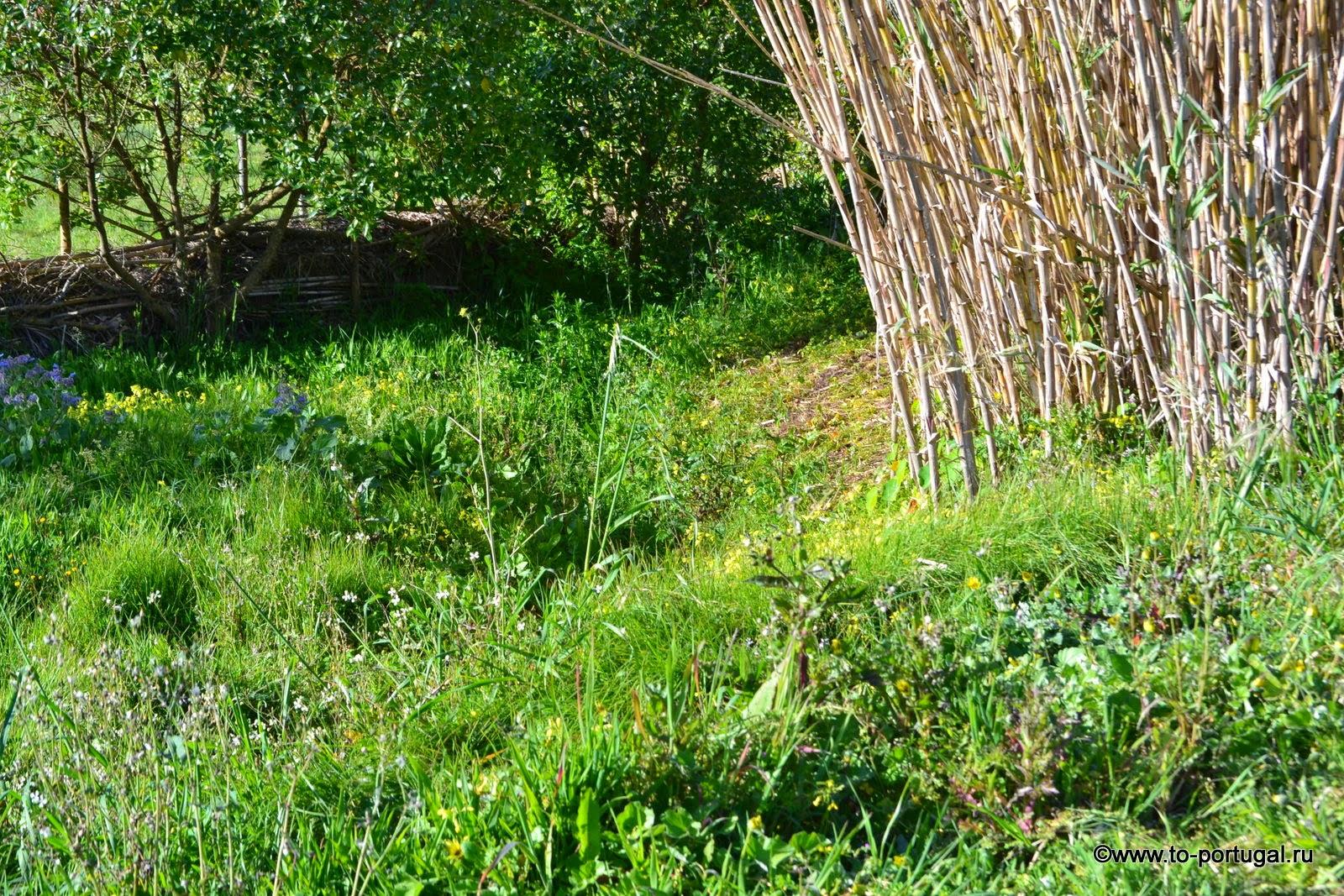 трава в Португалии, сад в Португалии
