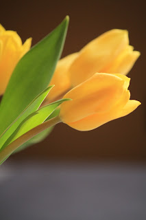 Yellow tulip in vase centerpiece