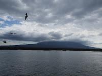 Fernandina Island, Galapagos Islands, Ecuador
