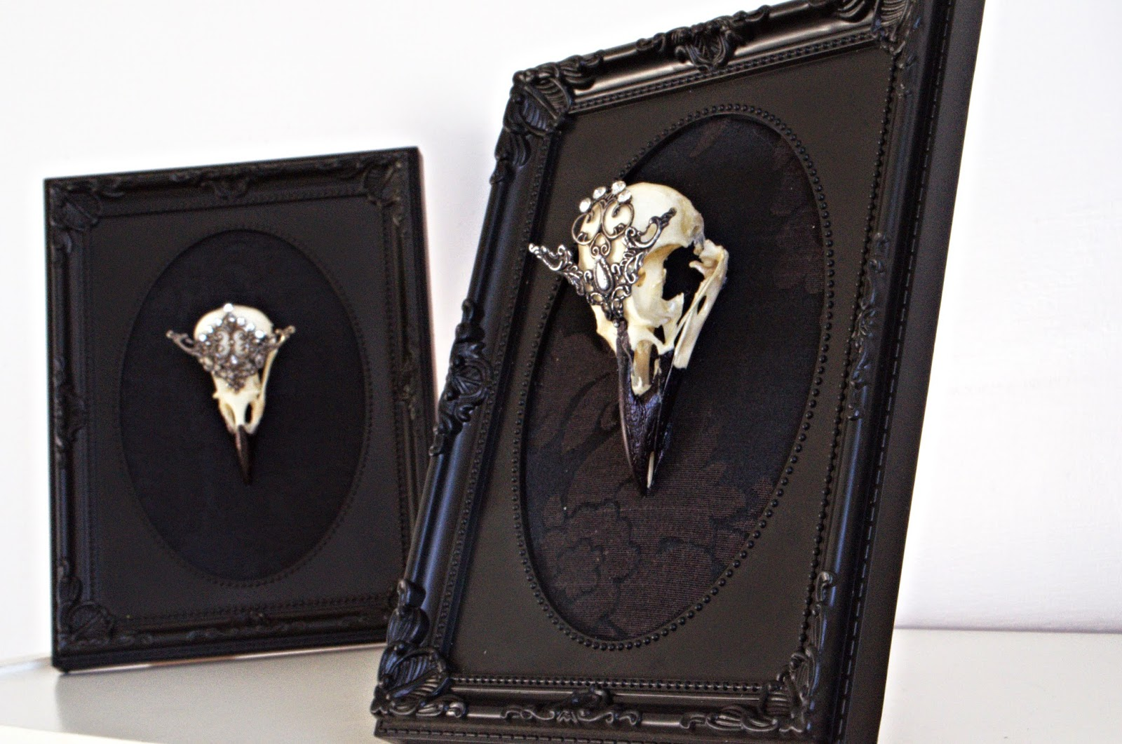 Taxidermy Bird Skull on Gothic Picture Frame. Christmas Gift Ideas.