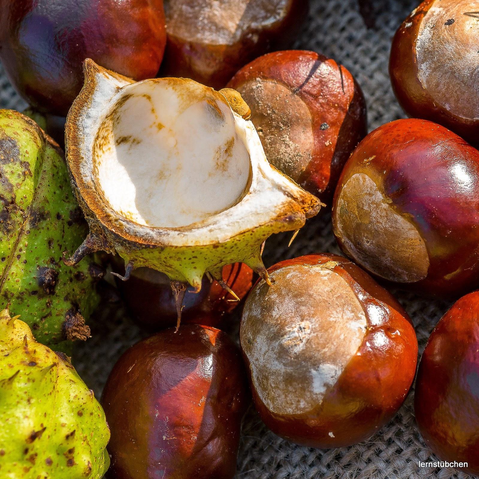 Lernstübchen: Äpfel oder Kastanien im Sachunterricht