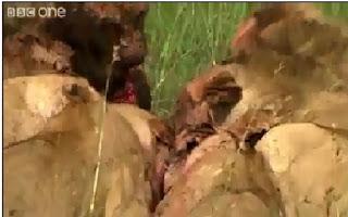 Peuple Massaï préservant la biodiversité