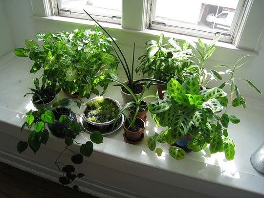 Green fork utah household plants are helpful - Best house plants ...