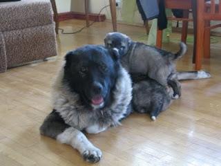 Ода и ее щенки