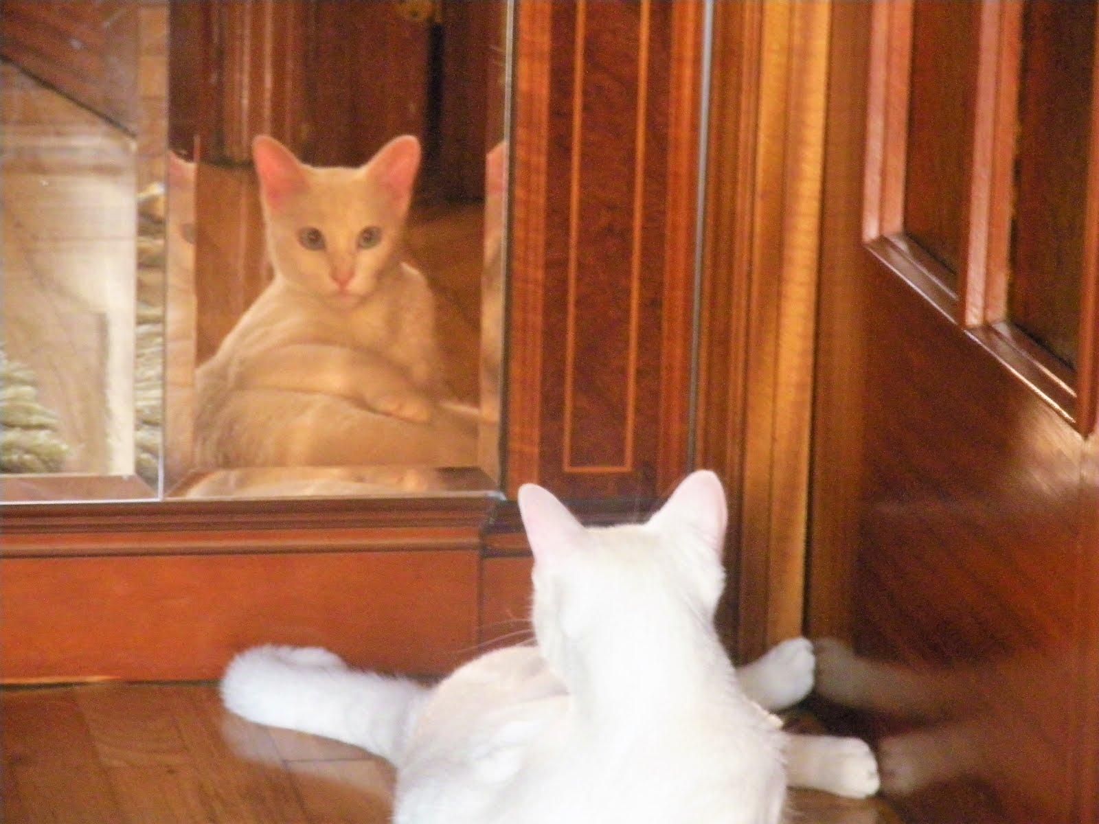 Lana en el espejo