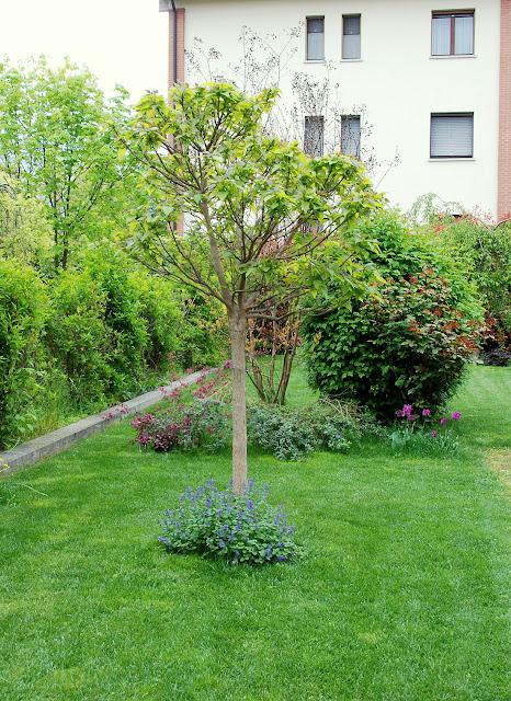 Il mondo in un giardino fine aprile in giardino - Alberi bassi da giardino ...