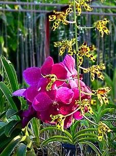 Exotische Orchideen