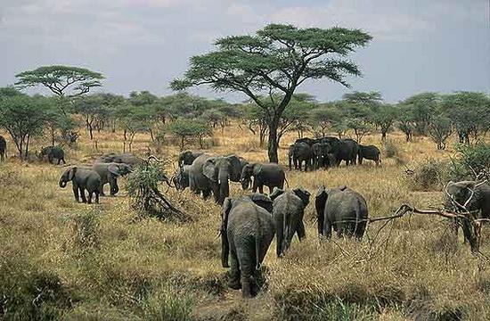 12 Cosas que no sabías sobre África