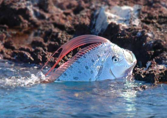Largest Marine Sea Creatures Out There Oarfish