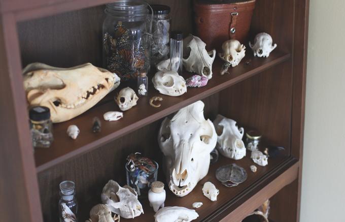 oddities, skulls, dead butterflies