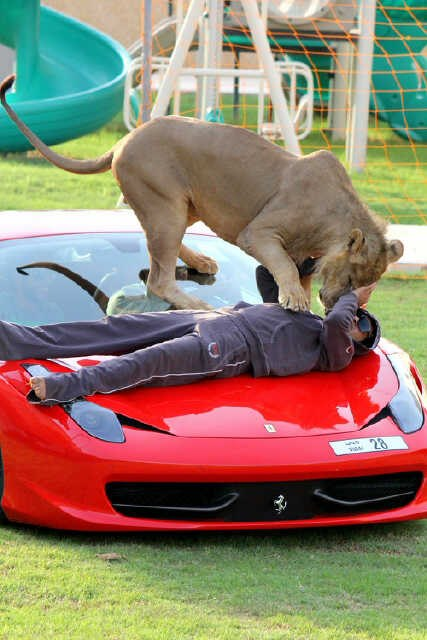 Photo Gallery: Exotic Cars and Exotic Animal