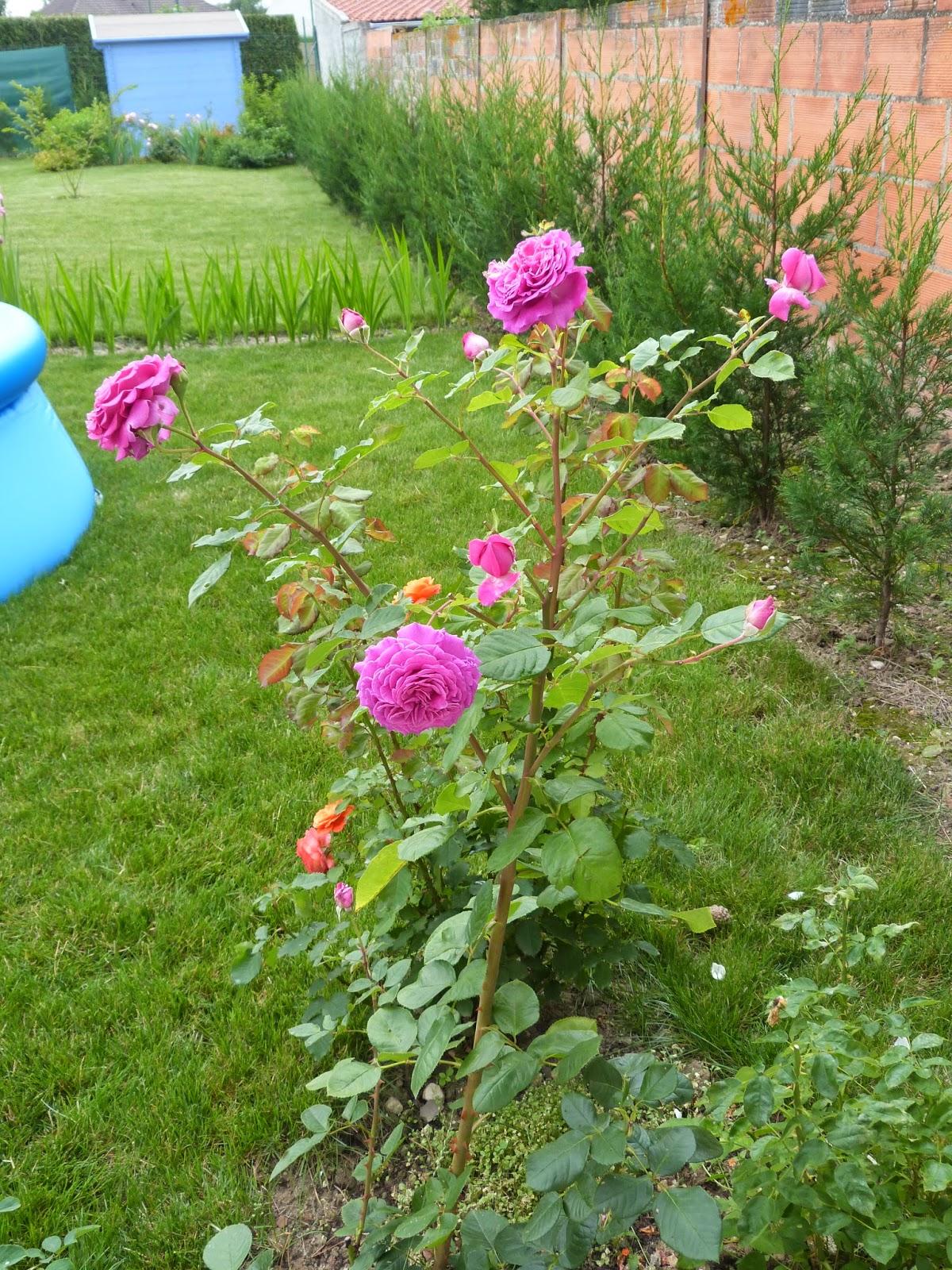 Un jardin des fleurs emilien guillot for Un jardin de fleurs