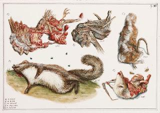 Roadkill, egg tempera, dead animal, illustration, illumination, painting