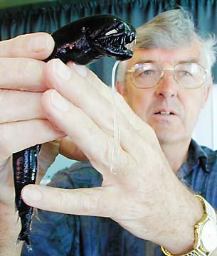 The Black Dragonfish
