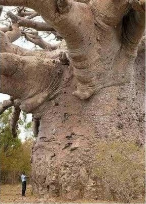 pohon raksasa, ikan lele, kucing, kodok, cumi cumi, hewan unik, hewan raksasa, makhluk raksasa, makhluk aneh