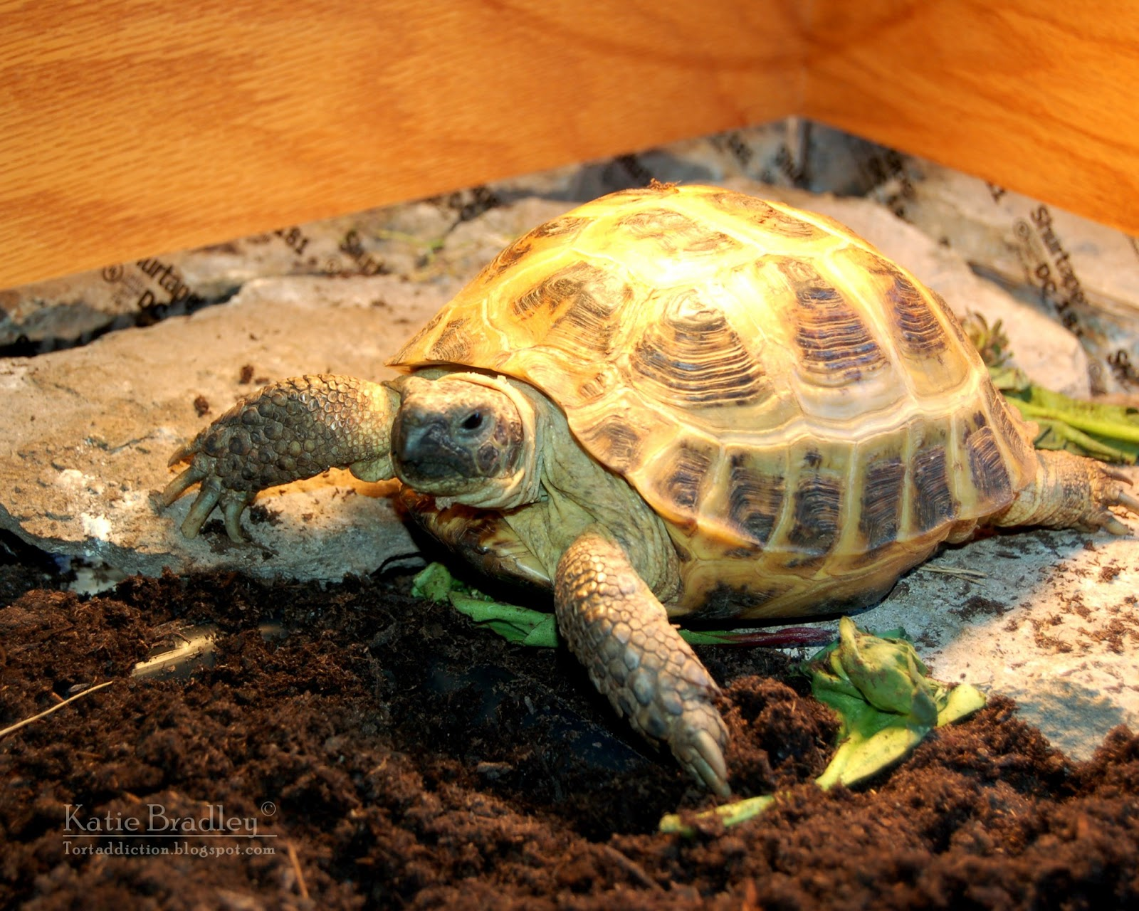 Tortaddiction how to build a tortoise table out of a bookshelf lady seems to really like her new space 100 better than the old mixing tub solutioingenieria Images