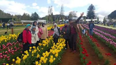 Pesta Tulip