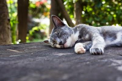 dormir para subir de peso