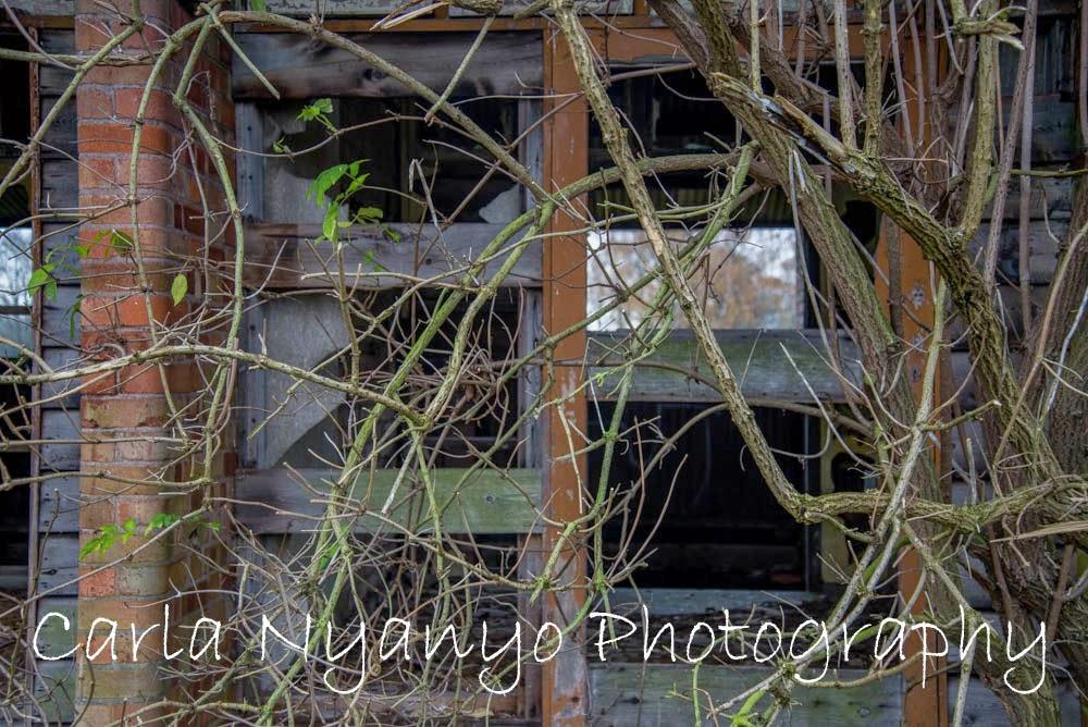 abandoned house 6