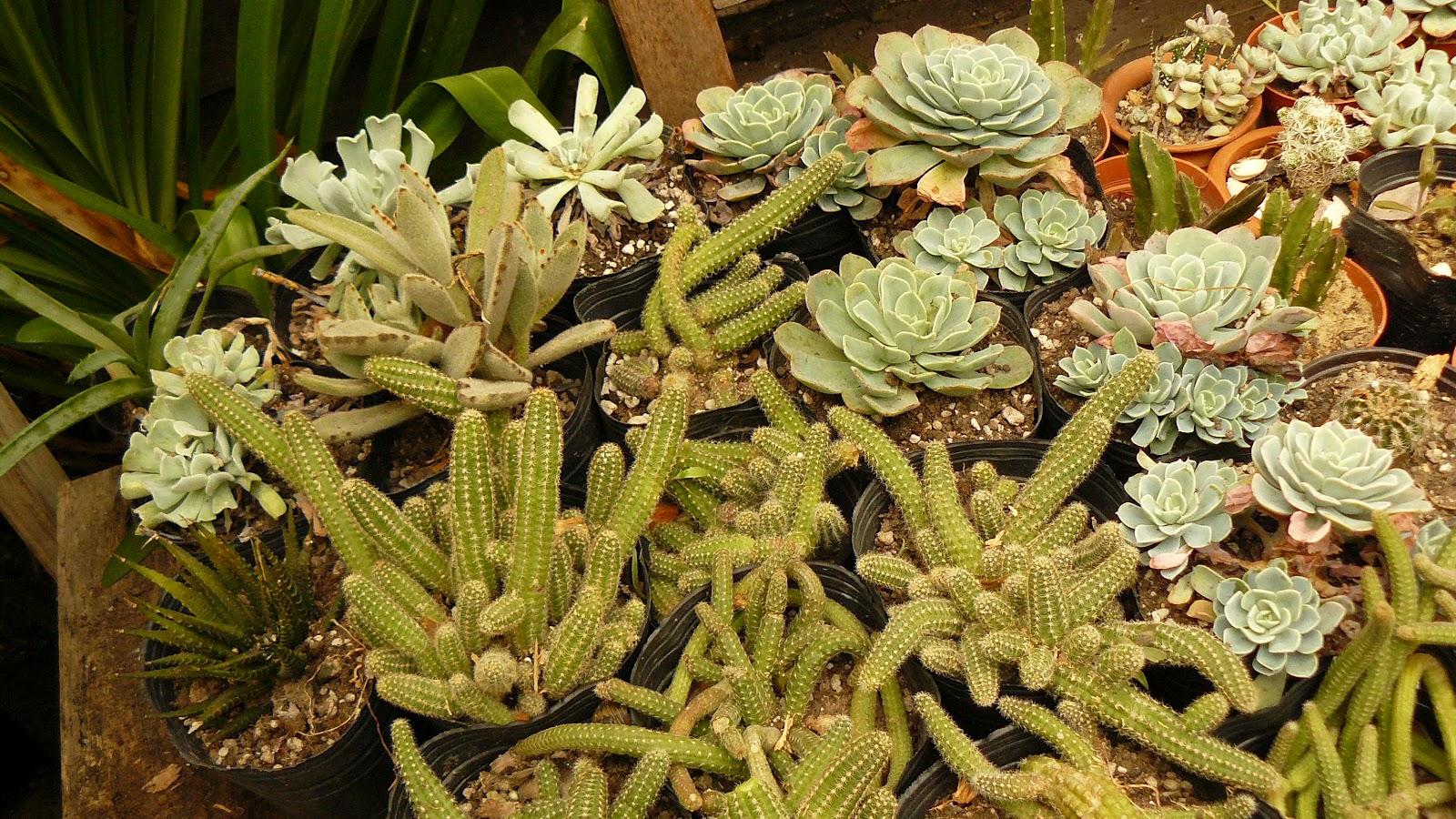 Jardines de cactus y suculentas agosto for Cactus y suculentas
