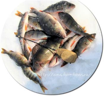 Проводка мормышки на зимней рыбалке