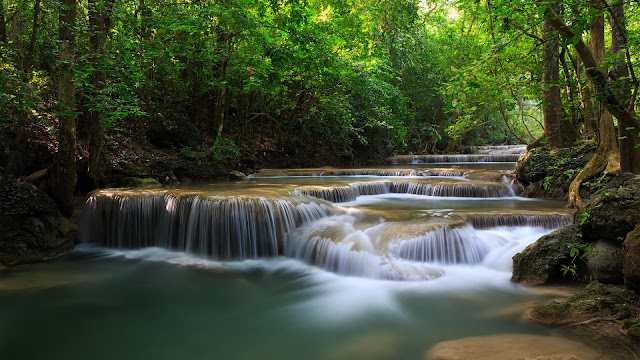 Forest trees waterfalls river green nature HD Wallpaper