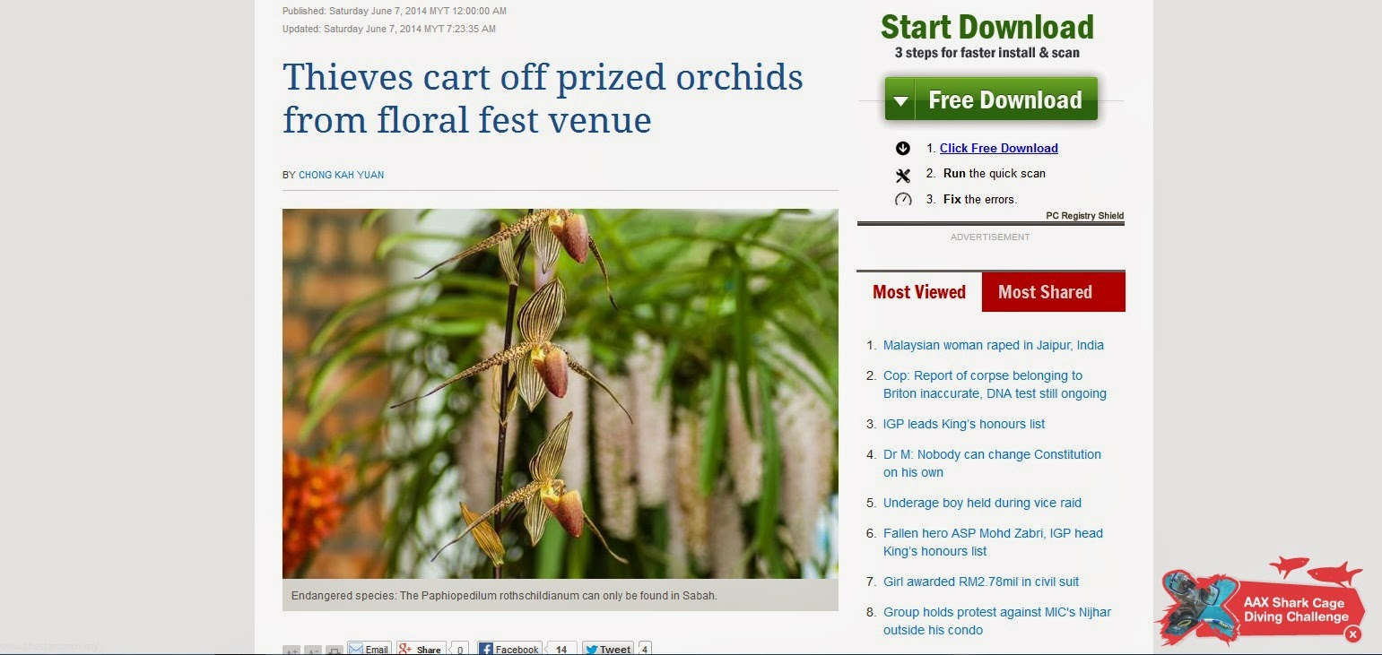 Thieves caff prized orchids from floral fest venue